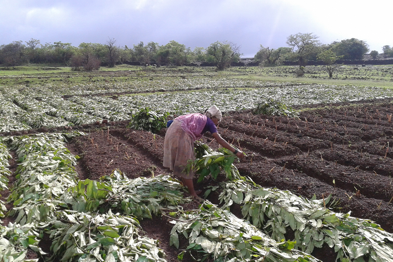 jamaican agro tourism farmers have a bright